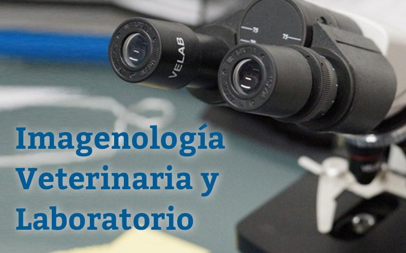 Imagenología Veterinaria y Laboratorio